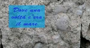 friuli, fossili, placca