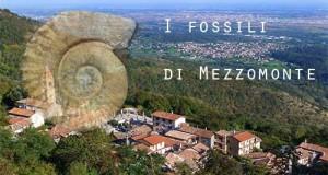 mezzomonte, fossili, friuli