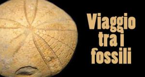 fossili, mezzomonte, pordenone
