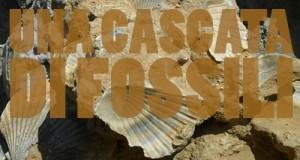 fossili, friuli