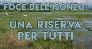 riserva naturale, isonzo