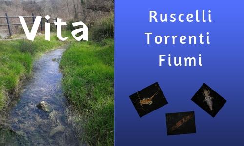 vita, ruscelli, fiumi, torrenti, acqua