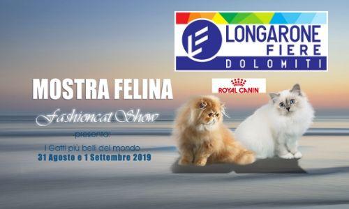 gatti manifestazione Felina Longarone