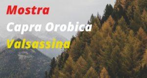 Mostra Capra Orobica Valsassina